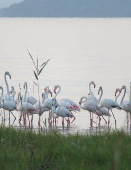 Pretty in pink: flamingos put on a colour display at False Bay